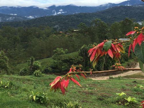 Pittier, Costa Rica